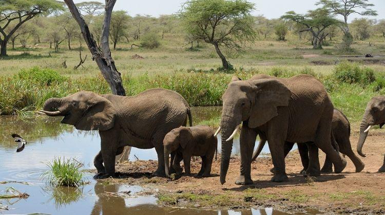 Selous Game Reserve Safari