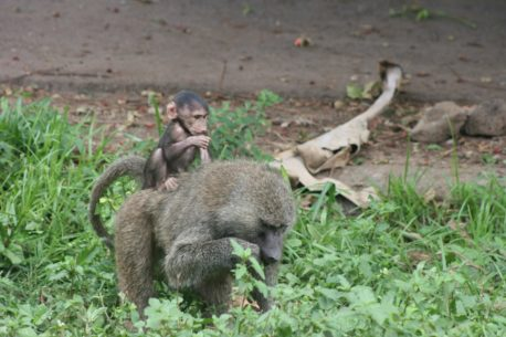 Gombe Stream National Park Tours