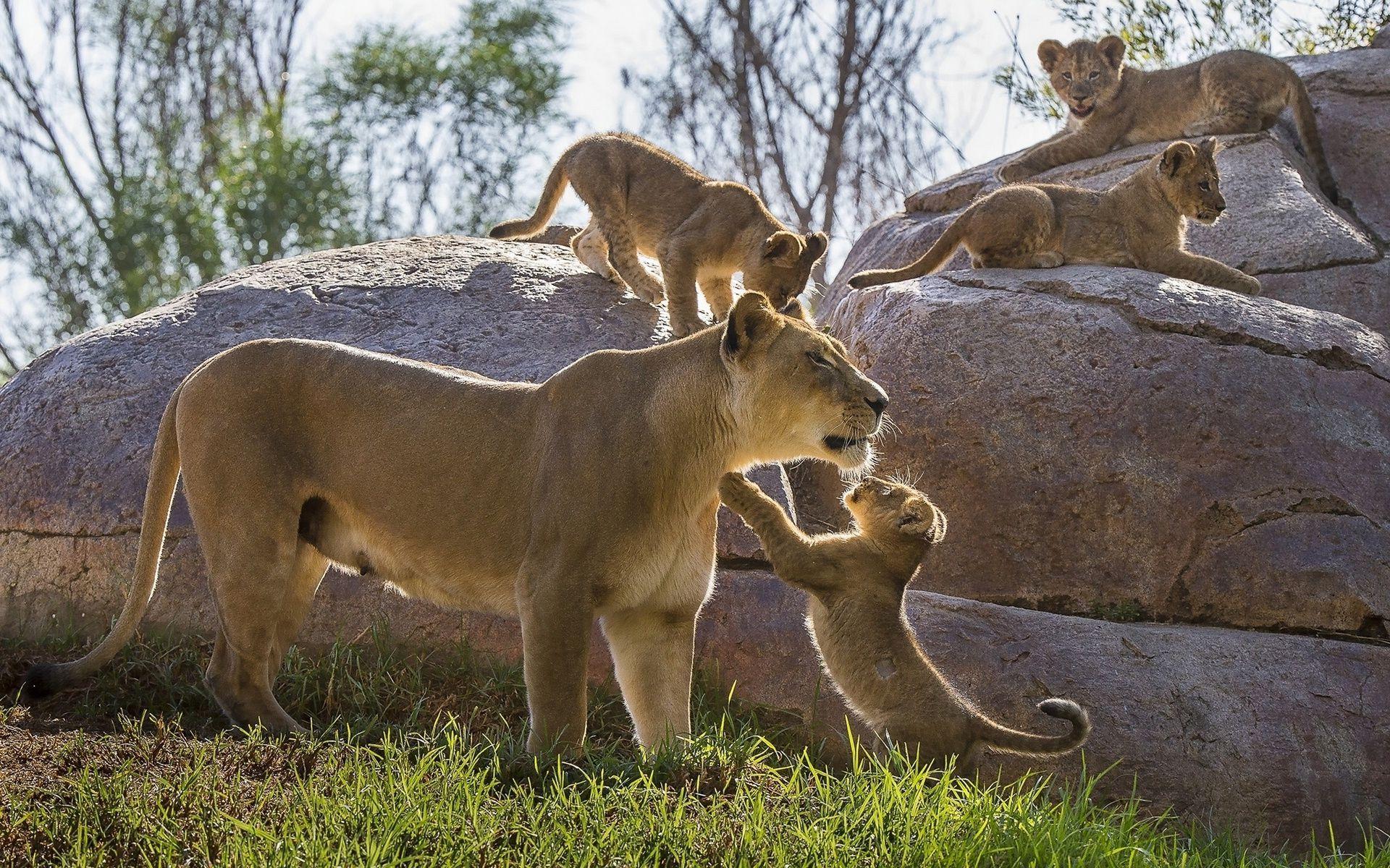 9 Day Wildlife Safari