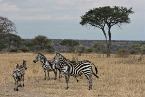 Tarangire National Park Tours