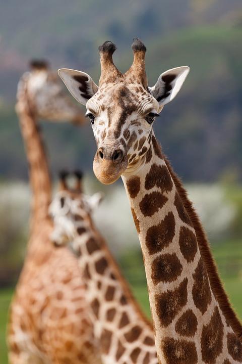 6 Day Luxury Safari