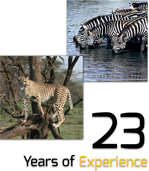 zebra-leopard