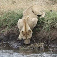 TanzaniaPhotoSafari