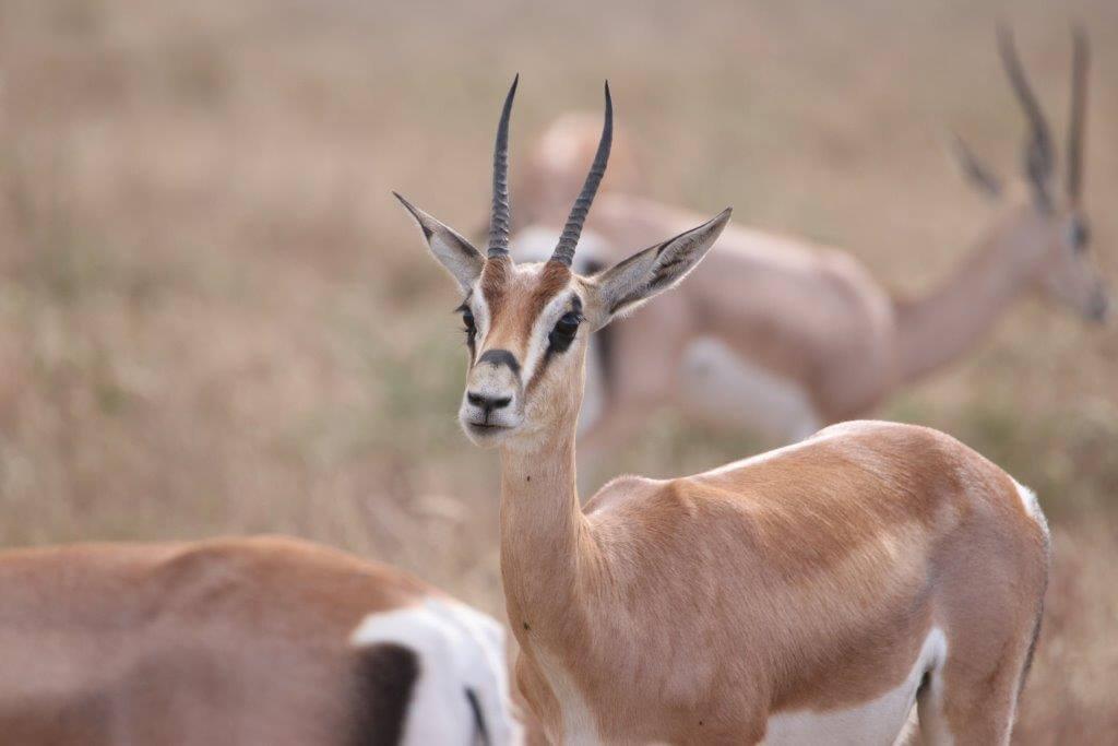 5 Day Serengeti & Ngorongoro Safari